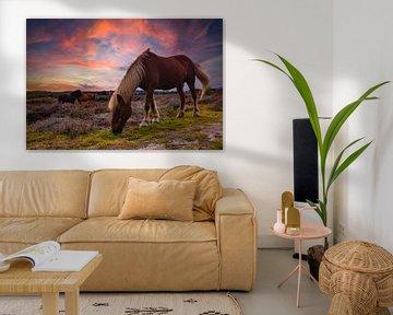 Wildpferde, Farbe von Nynke Altenburg