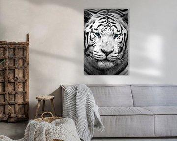 Prachtige blauwe ogen van een Bengaalse tijger van Kris Christiaens
