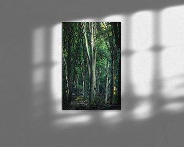 Hoge bomen in het Speulderbos van Vincent Fennis