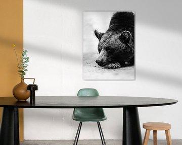 Fauler Bär von Bob Daalder