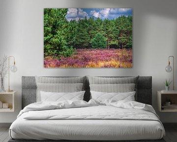 Violettes Heidekraut, grüne Kiefern und ein blauer Himmel in der Weerterheide von J..M de Jong-Jansen
