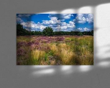 Blauwe luchten en paarse heide, de Weerterheide een lust voor het oog. van JM de Jong-Jansen