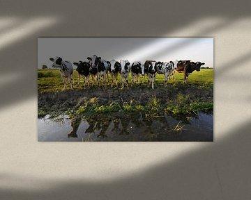 Kühe entlang des Grabens (Friesland) von Tjitte Jan Hogeterp