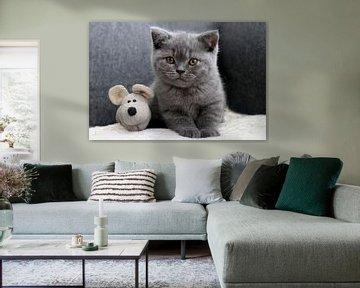 Danou die kleine Katze mit der Maus