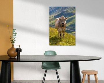 Kuh auf der Weide in Grauünden, Schweiz von Werner Dieterich