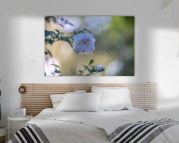 weiße Taurose von Tania Perneel