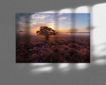 Dromerige zonsopkomst op de Hilversumse Zuiderheide