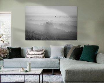 Nebliger Sonnenaufgang im Alblasserwaard von Jan van der Vlies