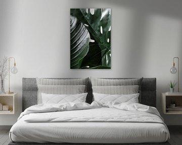 Dschungel von Emma Groenenboom