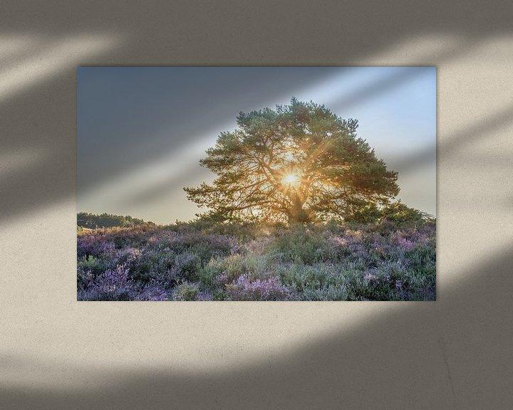 Beispiel: Sonnenstrahlen bei Sonnenaufgang auf der Brunssummerheide von John van de Gazelle
