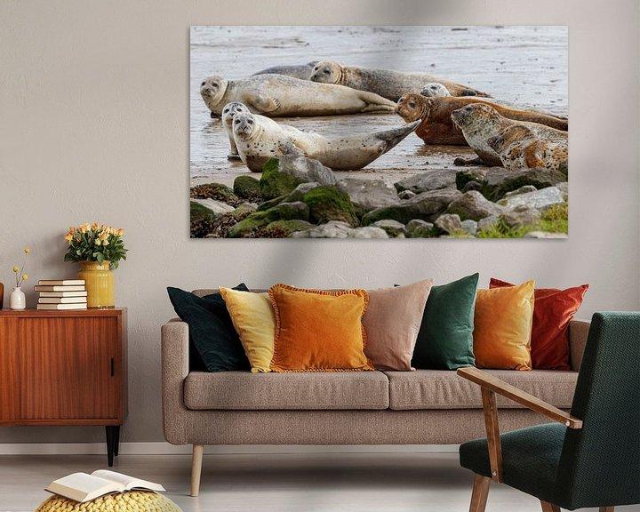 Beispiel: Neugierige Robben von Anjo ten Kate