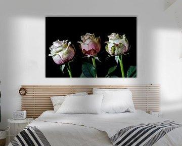 drie rozen, een teken van leven en liefde van Studio de Waay
