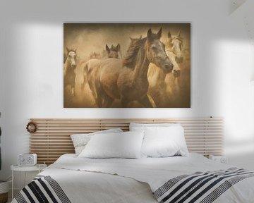 Pferde von didier de borle