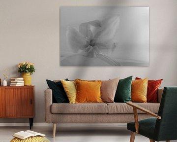 sereen monochroom van Freddy Hoevers