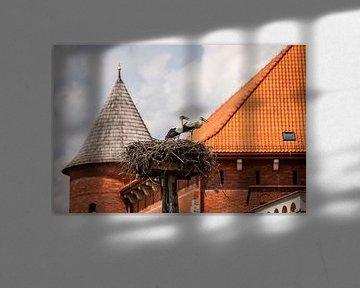 Störche auf ihrem Nest in der Nähe einer Burg in Pfählen von Eric van Nieuwland