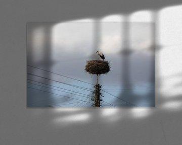 ooievaar op zijn nest op een hoge electriciteitspaal van Eric van Nieuwland