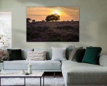 Hoorneboegse Heide - 4 van Nuance Beeld