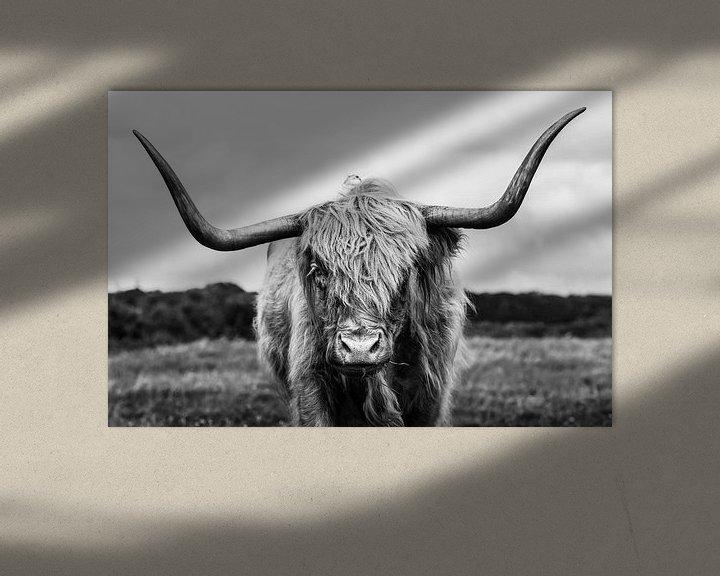 Sfeerimpressie: Schotse hooglander portret van Richard Guijt Photography