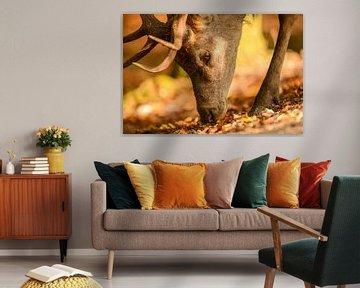 Edelhert in het bos tijdens de herfst van Sjoerd van der Wal