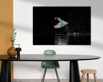 erfolgreicher Tauchgang eines Eisvogels von Patries Photo