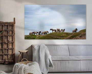 Konik paarden in de duinen van Texel. van Laurents ten Voorde
