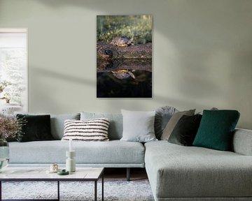 'Schildpad in het Mastbos Breda van Andre Gerbens