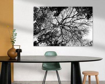 Doorkijk boom in zwart wit van Bianca ter Riet