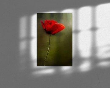 Bemalter roter Mohn auf grünem Hintergrund von Diana van Tankeren