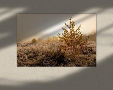 Heidelandschap met kleine berkenbomen met felgeel blad van Sjoerd van der Wal
