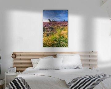 Blühende Heidekrautpflanzen während des Sonnenaufgangs im Spätsommer von Sjoerd van der Wal