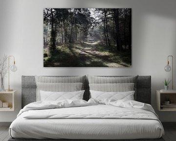 Het bospad van DuFrank Images