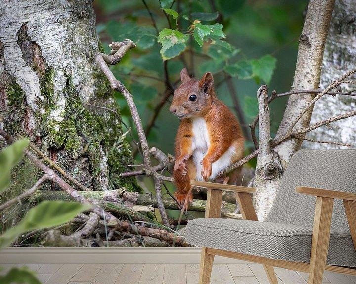 Sfeerimpressie behang: eekhoorn tussen de berken van Jaap Tempelman