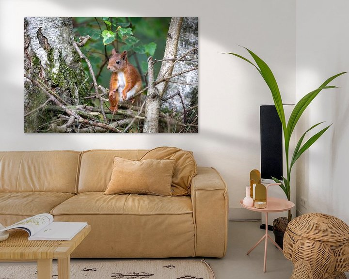 Sfeerimpressie: eekhoorn tussen de berken van Jaap Tempelman