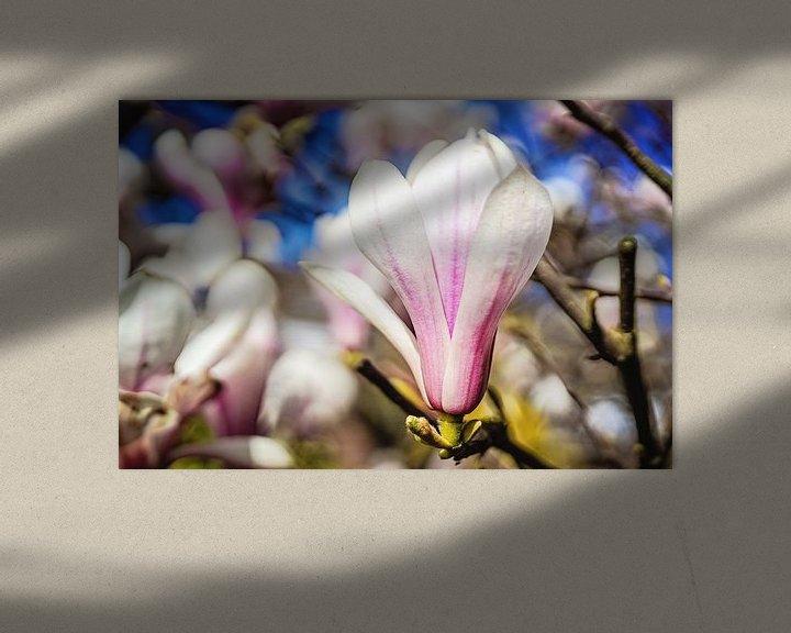 Sfeerimpressie: Magnolia van Anita Servaas