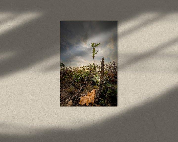 Sfeerimpressie: De kleine eik van Jaap Tempelman