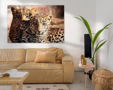 Leopardenaugen von Kris Christiaens