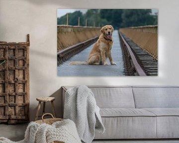 Golden Retriever auf Schachtbrücke von Joost Winkens
