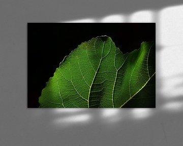Feigenblatt vor dunklem Hintergrund von Ulrike Leone
