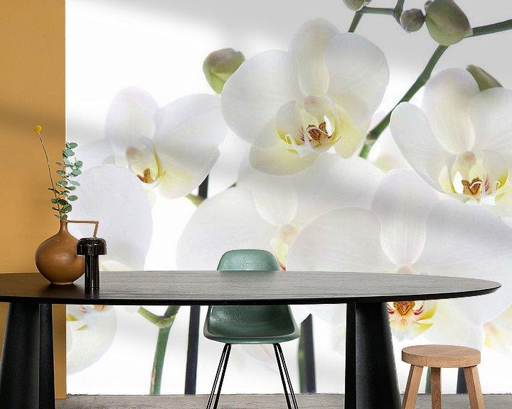 Sfeerimpressie behang: Orchids van Anita Servaas