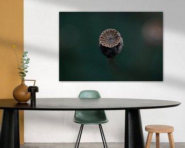 Mohnball mit dunkel türkisfarbenem Hintergrund von KB Design & Photography (Karen Brouwer)