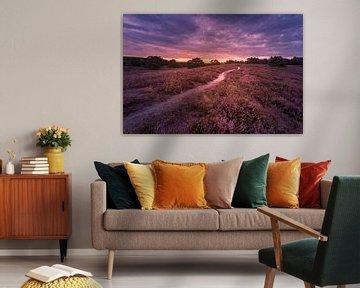 deep purple van Bas Handels