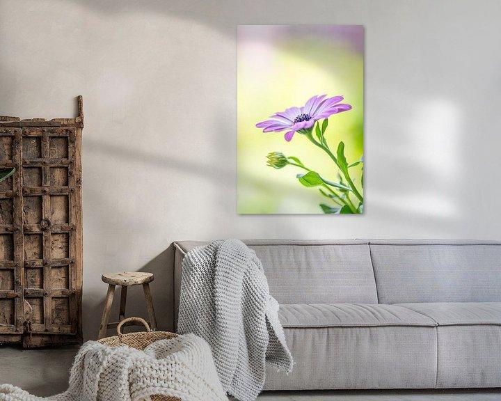 Beispiel: Stilleben eines spanischen Gänseblümchens und weiches Bokeh von John van de Gazelle