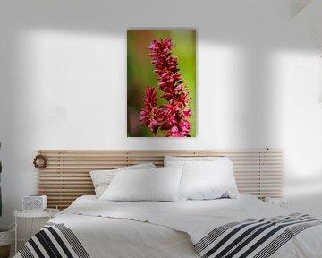 rosa Blume von Marieke Funke