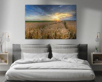 Coucher de soleil dans un champ de maïs sur Michael Valjak