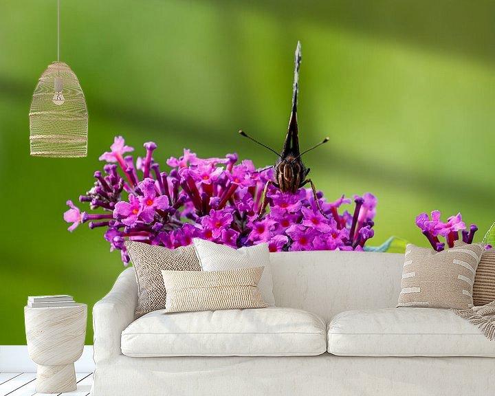 Beispiel fototapete: Posierender Schmetterling von Anjo ten Kate
