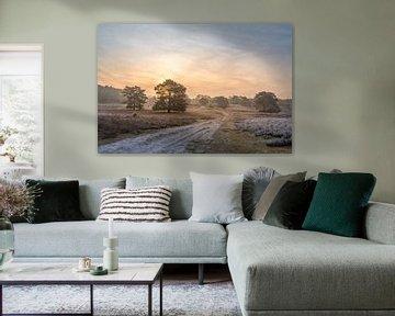 Brunsummerheide bei Sonnenaufgang von John van de Gazelle