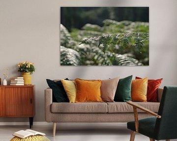 Schönes Bild von Farnen (Pflanze) von Hannah Kuijt