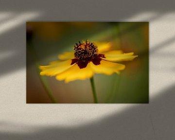 gelbe Blume von KB Design & Photography (Karen Brouwer)