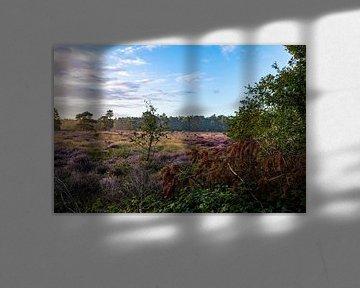 Veluwse Heide van Dylan Bakker