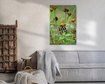 2 Schmetterlinge zusammen auf einer Blume von Wim Westmaas